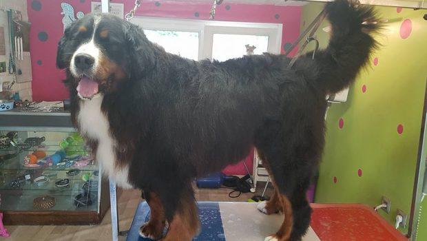 Salon de toilettage pour chien et chat marquette en for Salon toilettage chien